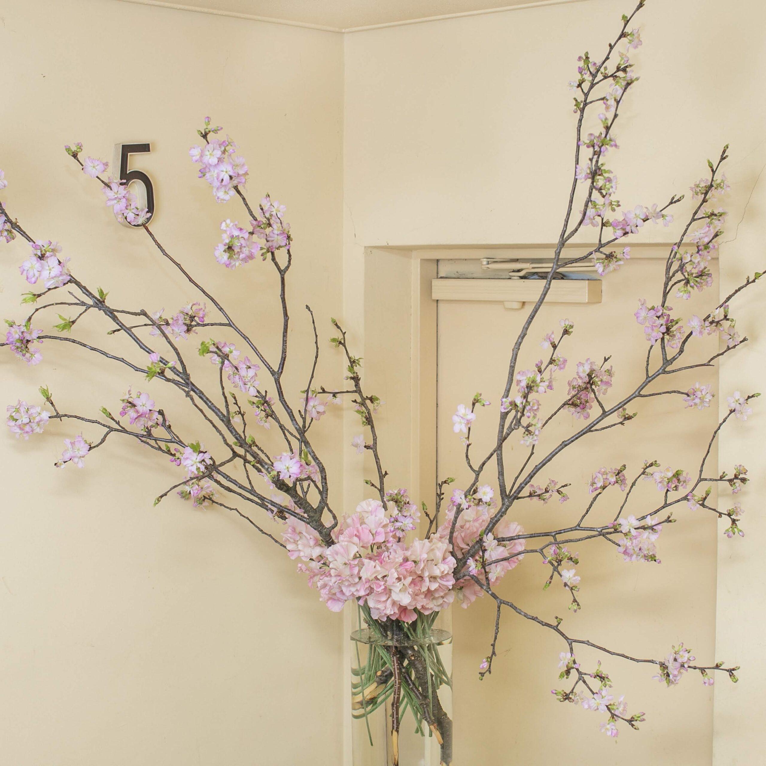 桜_1002