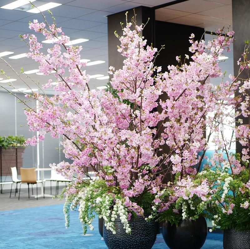 桜_1005